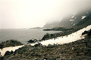 Laurie Island - Adélie and chinstrap penguin rookeries on Laurie Island in the South Orkney Islands, 1996.