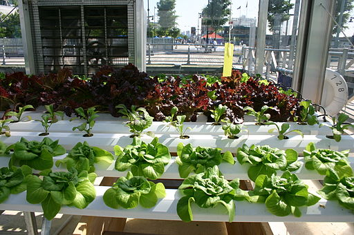 How To Aquaponics Hydroponics
