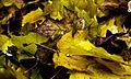 Leaves (2176414274).jpg