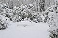 Lebenswertes chemnitz winter stadtpark schnee rhododendron.jpg