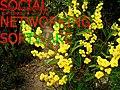 Leighblackall-64955397.jpg
