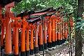 Les Torii du sanctuaire shintô Fushimi Inari (Kyoto, Japon) (42099620125).jpg
