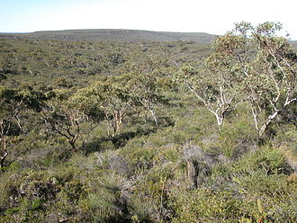 Lesueur National Park - Open Eucalyptus woodland with a diverse understorey