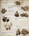 Lichenes Helvetici III IV 1842 003.jpg