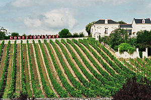 Photo of a vineyard in the Loire Valley, France.