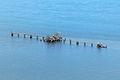 Luftaufnahmen Nordseekueste 2012-05-by-RaBoe-D50 034.jpg