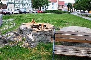 Mühlberg-Markt-Lindenbaumstumpf-CTH.jpg