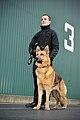 MOD Guard Service Dog Handler MOD 45152256.jpg