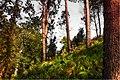 Madeira Wald (38038193551).jpg