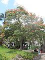 Madeira em Abril de 2011 IMG 1833 (5663699121).jpg