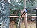 Madeira em Abril de 2011 IMG 2168 (5664253023).jpg