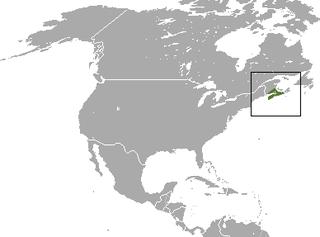 Maritime shrew species of mammal