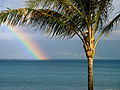 Maui rainbow with Palm Tree (461764690).jpg