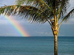 Maui rainbow with Palm Tree (461764690)