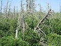 McKenna's Marsh, PEI (35057966243).jpg