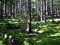 Mechový les.JPG