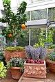 Mediterranean Room at the US Botanic Garden (25404773354).jpg