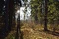 Meshchersky park-4.jpg