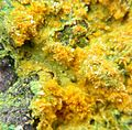 Metatyuyamunite-Carnotite-Malachite-214944.jpg