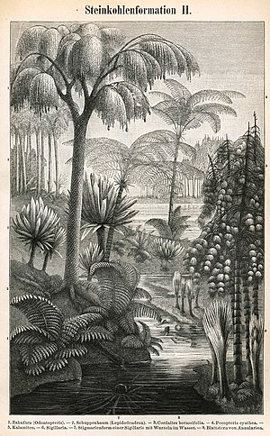 Carboniferous - Etching depicting some of the most significant plants of the Carboniferous.