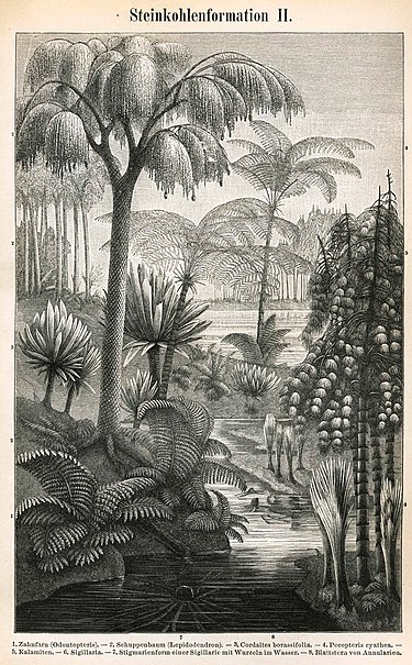 Etching depicting some of the most significant plants of the Carboniferous. Meyers b15 s0272b.jpg