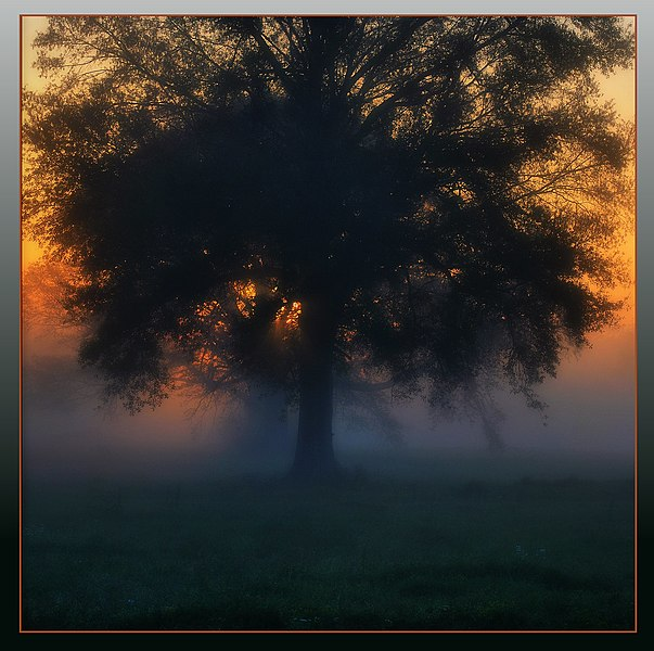 File:Mistertree in Mississippi - panoramio.jpg