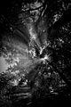 Misty Trees (6312466604).jpg