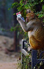 Monkey tropicana.jpg