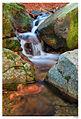Montseny riuets II (3129820617).jpg