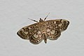 Moth 2 (5899610817).jpg