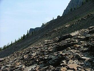 Mount Stephen trilobite beds - The trilobite beds
