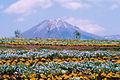 Mt Daisen in Spring bs1500.jpg