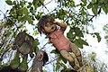 Muñeca vieja colgada en alambre.JPG