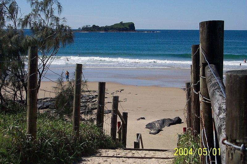 File:Mudjimba Island and Mudjimba Beach - panoramio.jpg