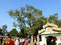 Mulagandha Kuti Vihar Sarnath India - panoramio (3).jpg