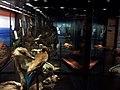 Museo Nacional de Historia Natural (Chile).jpg