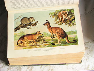 New International Encyclopedia - Marsupials