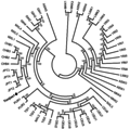 NJ tree of Tianjiao1 (DU Mongolian) and other 54 unrelated individuals.png