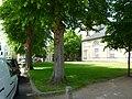 NMS Hinter der Kirche Kirchhof.JPG