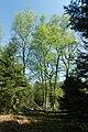 NSG Bildchen Wald 4.jpg