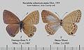 NacadubaSubperusiaPaskaMFUpUnAC1.jpg