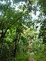 Nairobi Arboretum Park 02.JPG