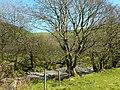 Nant bach ger Clochfaen isaf - Small stream near Clochfaen isaf - geograph.org.uk - 1262849.jpg