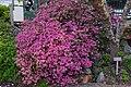 National Rhododendrum Dardens, Olinda, Victoria, Australia - panoramio.jpg