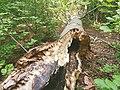 Nationalpark Hainich craulaer Kreuz 2020-06-03 23.jpg