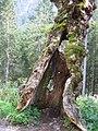 Natur im Allgäu - panoramio.jpg