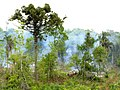 Naturaleza vs. desarrollo - panoramio.jpg