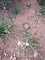 Nature des Monts Beni Chougranes Mohammadia 30.jpg