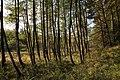 Nature reserve Dobrockovske hadce in autumn 2011 (27).JPG