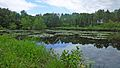 Naturschutzgebiet Trunnenmoor (NSG-HA 47).jpg